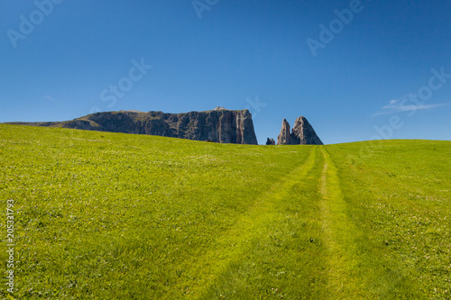 Plexiglas Pistache Road going through a field of green grass with dolomite mountains in the background in Seiser Alm - Alp de suise Italy