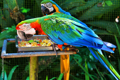 Aluminium Papegaai Iguasu bird park