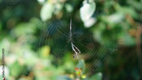 Fototapeta spider wire