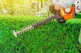 Garden gasoline scissors, trimming green bush, hedge. Working in the garden. - 205354190