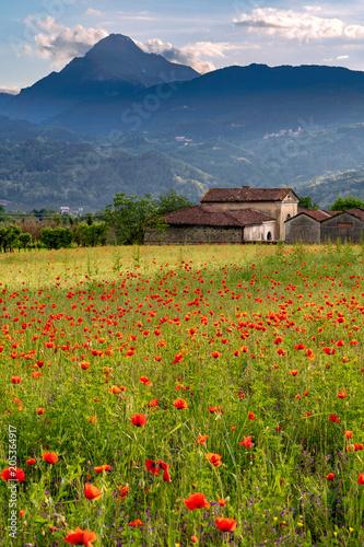 Plexiglas Klaprozen Poppy Field in Tuscany