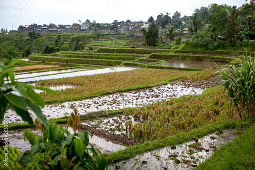 Plexiglas Rijstvelden Bali rice terraces in water. Rice fields of Jatiluwih. The graphic lines and verdant green fields. Some of the fields are hundreds of years old.