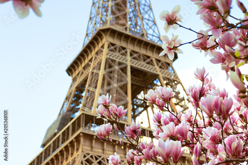 Fotobehang Eiffeltoren Blossoming magnolia against the background of the Eiffel Tower