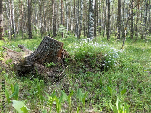 Plexiglas Olijf В лесу