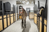 Beautiful horse standing in the stable ready for equiping with seat - 205387781