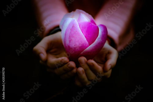 Fototapeta Fairytale magnolia flower luminous in child's hands in the dark night