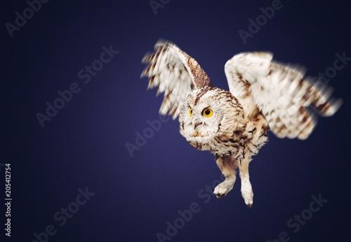 Fotobehang Eagle Owl.