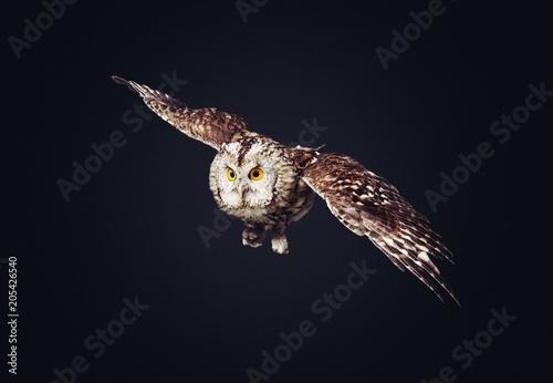 Canvas Eagle Owl.
