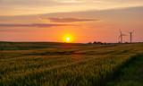 sunset over a corn field - windmills at the horizon