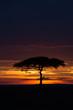 Quadro Masai Mara at sunset