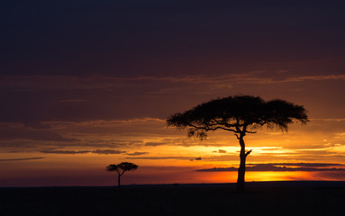 Masai Mara at sunset