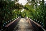 Ponte nella foresta