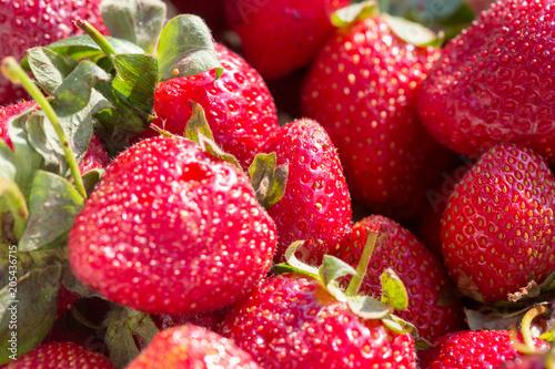 Foto Murales strawberries macro