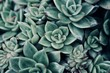 mexican typical plant summer pattern, green cactus, aloe, succulent - 205445168