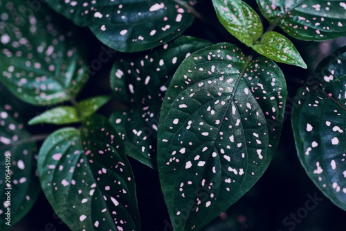 Canvas Natuur tropical green background, exotic green leaves, texture, pattern