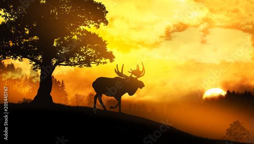 Plexiglas Meloen Moose in wild nature landscape