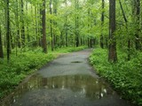 wet asphalt path in the woods with water - 205467937