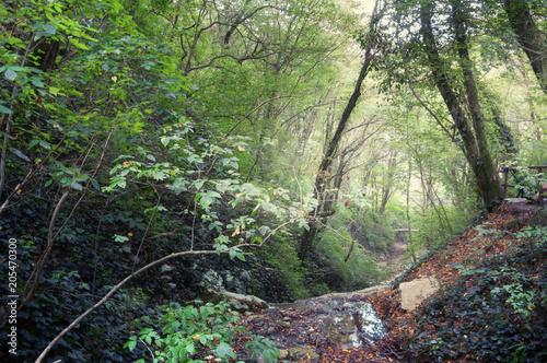 Plexiglas Olijf Осенний лес. Лесные тропы в осеннем лесу