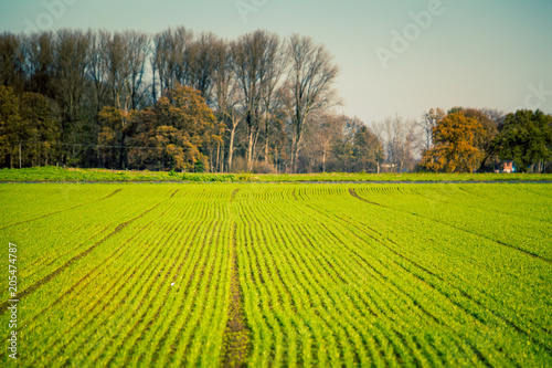art rural landscape. field and grass