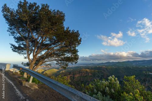 Canvas Canarische Eilanden Tree on the edge of caldera de Bandama, Gran Canaria, Spain