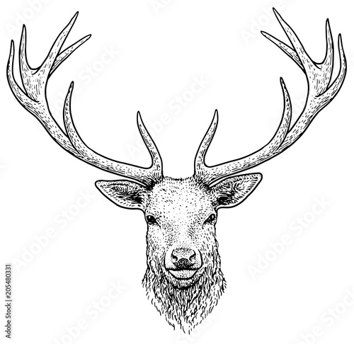 Deer head illustration, drawing, engraving, ink, line art, vector
