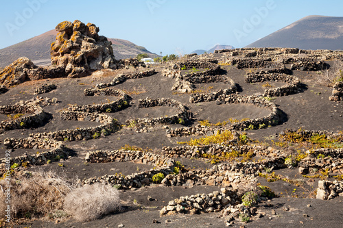 Fotobehang Canarische Eilanden Vineyard, Lanzarote, Canary Islands
