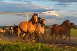 a herd of horses runs against the sky