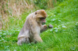 A little monkey is sitting on the green meadow