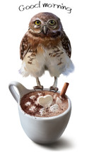 Owl And Cup Of Coffee Watercolor Painting Sticker