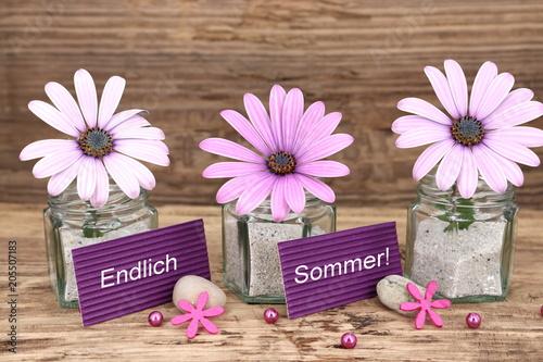 Fotobehang Zen Stenen Endlich Sommer - zarte Blüten der Bornholmmargerite auf rustikalem Holz