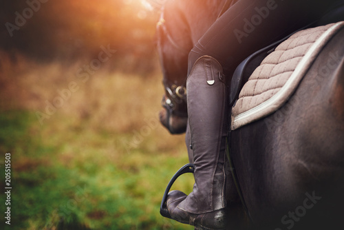 Woman in riding gear sitting on a horse in a field