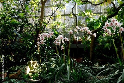 Fototapeta Орхидея
