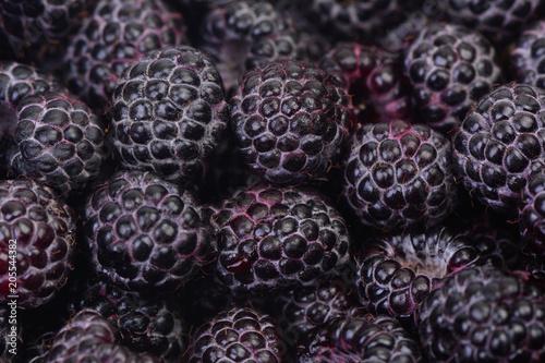 Black raspberry - 205544382