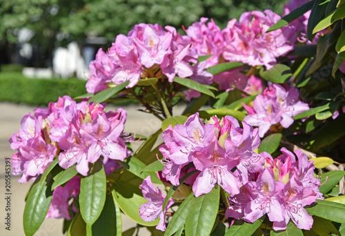 Różowe kwiaty zbliżenie w springtime