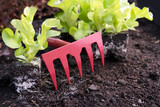 red rake between young green lettuce plants on dark brown soil in the vegetable garden bed, copy space - 205564590