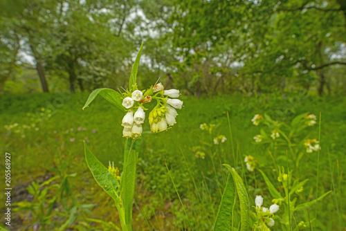 Fotobehang Groene Trees and wild flowers in a field in sunlight in spring