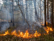 Quadro Fire in the forest, the dry grass burns