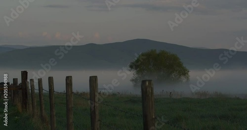 Timelapse - morning mist flows over fence line and tree in spring