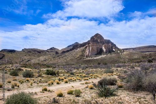 Fotobehang Blauwe hemel Desert Landscape with Cactus and Desert Plants