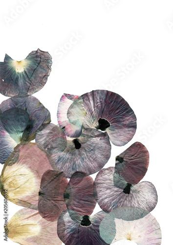 poppy petals on white