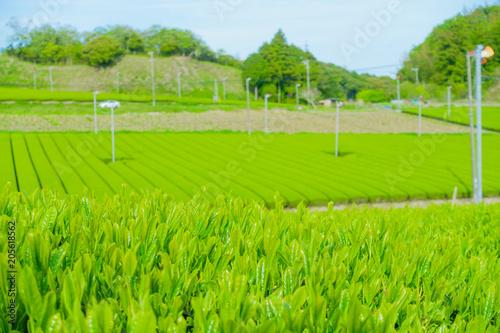 Aluminium Lime groen 新緑 茶畑