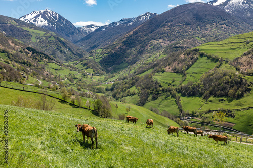 Valley of Leitariegos, in Asturias (Spain), at the beginning of spring
