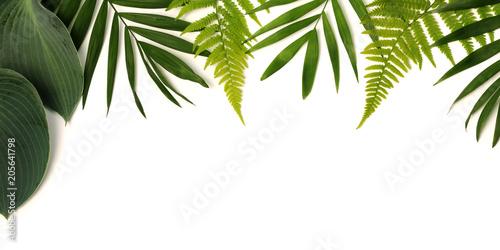 Fototapeta frame of green leaves