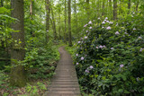 green forest with flowers as rhododendron