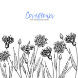 Hand drawn wild hay flowers. Cornflower flower. Medical herb. Vintage engraved art. Border composition. Good for cosmetics, medicine, treating, aromatherapy, nursing, package design health care.