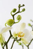 Beauty orchid on a white background. - 205679725