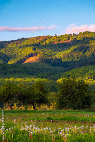 Foto Murales beautiful mountainous countryside at sunrise. lovely summer landscape with pink clouds