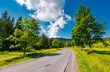 trees by the road in mountains. beautiful nature scenery in mountainous area. lovely transportation background. wonderful summer weather with some clouds on a blue sky - 205687715