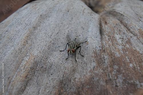 Fototapeta Fly eye orange