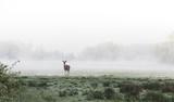 Deer standing in a foggy grassy field - 205705342
